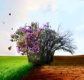 Paisagem criativa do conceito Árvore viva e inoperante fotografia de stock