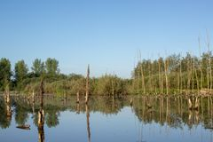Paisagem da água nos Países Baixos imagens de stock