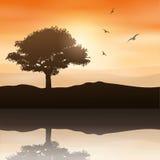 Paisagem da árvore Imagens de Stock Royalty Free