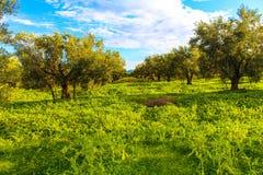 Paisagem da árvore Fotos de Stock Royalty Free