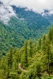 Paisagem da árvore nos himalayas, vale de Deodar do sainj, kullu, Himachal Pradesh, india imagens de stock royalty free
