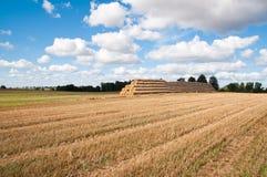 Paisagem da agricultura Foto de Stock