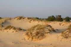 Paisagem da areia do por do sol, deserto amarelo, praia com pinheiro e grama Imagens de Stock