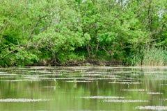 Paisagem da beira do lago Imagens de Stock Royalty Free