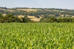 Paisagem da exploração agrícola de Sussex Imagem de Stock Royalty Free
