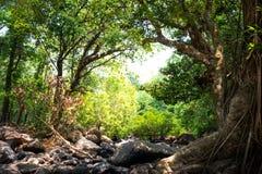 Paisagem da floresta úmida Fotos de Stock Royalty Free