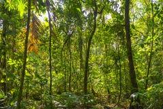 Paisagem da floresta úmida das Amazonas, Equador fotos de stock royalty free
