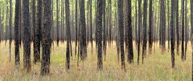 Paisagem da floresta Foto de Stock Royalty Free