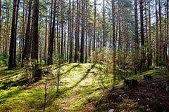 Paisagem da floresta Fotos de Stock