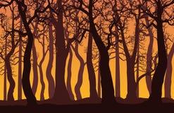 Paisagem da floresta com as árvores desencapadas no por do sol Fotos de Stock Royalty Free