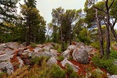 Paisagem da floresta com as rochas na Croácia Fotografia de Stock Royalty Free