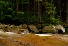 Paisagem da floresta com o rio selvagem no primeiro plano Imagens de Stock Royalty Free