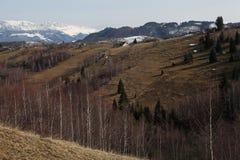 Paisagem da floresta da montanha na luz do por do sol Imagem de Stock