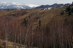 Paisagem da floresta da montanha na luz do por do sol Imagens de Stock Royalty Free