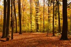 Paisagem da floresta da queda Foto de Stock