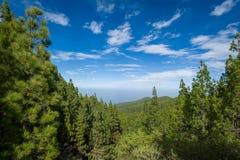 Paisagem da floresta de Esperanza do La imagens de stock royalty free