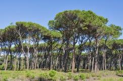 Paisagem da floresta de Toscânia Fotografia de Stock