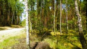 Paisagem da floresta de Tuchola, Kashubia sul, Polônia fotografia de stock royalty free