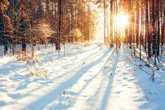 Paisagem da floresta do inverno Imagens de Stock Royalty Free