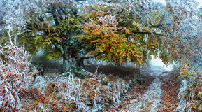 Paisagem da floresta do inverno fotos de stock royalty free