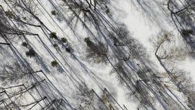 Paisagem da floresta do inverno e por do sol, árvores do inverno da neve, natureza bonita, vista aérea filme