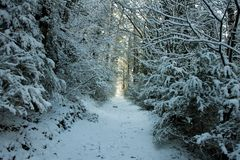 Paisagem da floresta do inverno em Catalonia fotografia de stock royalty free
