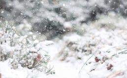 Paisagem da floresta do inverno da floresta do inverno em um dia ensolarado Neve-c Imagens de Stock