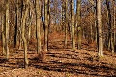 Paisagem da floresta do outono Fotografia de Stock