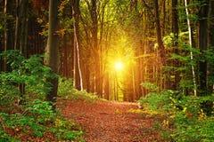 Paisagem da floresta do outono Fotos de Stock Royalty Free