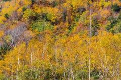 Paisagem da floresta do outono, cumes de Tateyama Japão imagens de stock