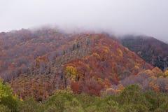Paisagem da floresta do outono em montes na névoa imagens de stock