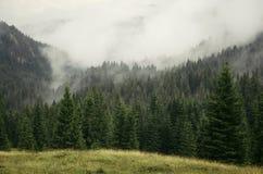 Paisagem da floresta do pinho de montanha com névoa Fotos de Stock