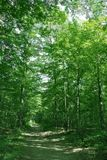 Paisagem da floresta do verão Foto de Stock