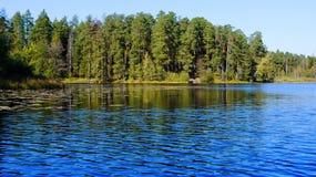 Paisagem da floresta e do lago Imagem de Stock Royalty Free