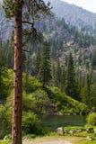 Paisagem da floresta e do rio da montanha fotografia de stock royalty free