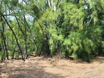 Paisagem da floresta em um dia ensolarado imagem de stock royalty free
