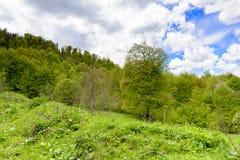 Paisagem da floresta da montanha foto de stock