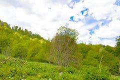 Paisagem da floresta da montanha imagem de stock