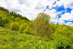 Paisagem da floresta da montanha fotografia de stock royalty free