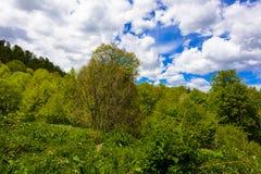 Paisagem da floresta da montanha fotografia de stock