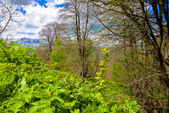 Paisagem da floresta da montanha fotos de stock royalty free