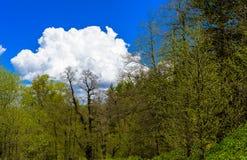 Paisagem da floresta da montanha imagem de stock royalty free