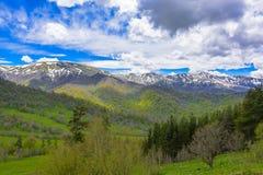 Paisagem da floresta da montanha fotos de stock