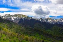 Paisagem da floresta da montanha foto de stock royalty free