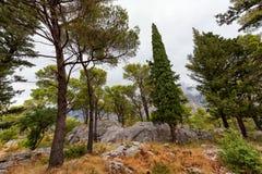 Paisagem da floresta na Croácia Foto de Stock