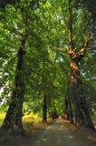 Paisagem da floresta no fim do outono Fotos de Stock Royalty Free