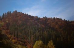 Paisagem da floresta no outono fotografia de stock