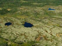 paisagem da Floresta-tundra Fotografia de Stock