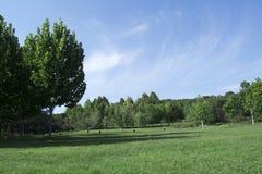 Paisagem da grama verde Fotografia de Stock