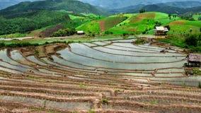 Paisagem da inclinação do campo do arroz do lapso de tempo de Hd vídeos de arquivo